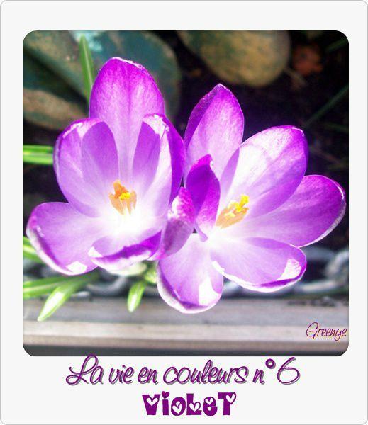 06 violet''