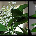 Bouquet du week end - sem 18 et projet 52-2015