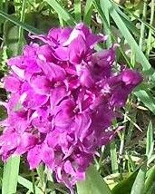 28_avril_2010_orchid_e_8_BIS