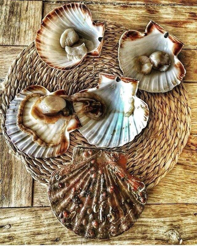 Les coquilles saint jacques dans la cuisine de fran oise - Cuisiner des coquilles saint jacques ...