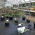 Compte rendu de l'exposition au jardin botanique des montagnes noires