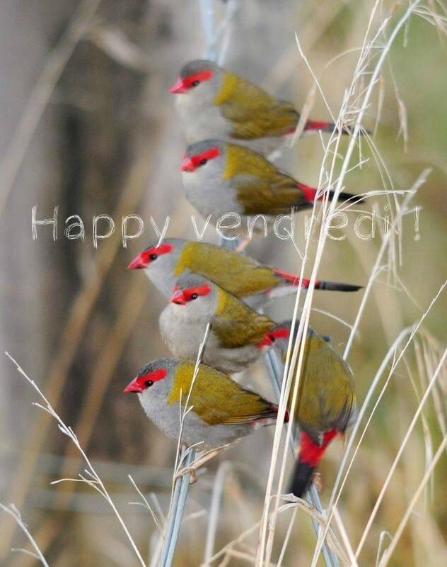 Happy Vendredi1