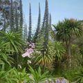 Exotique végétation