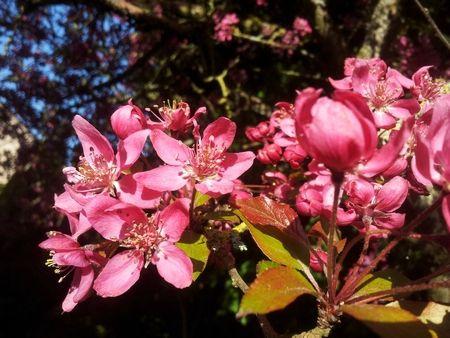 arbre-rose2