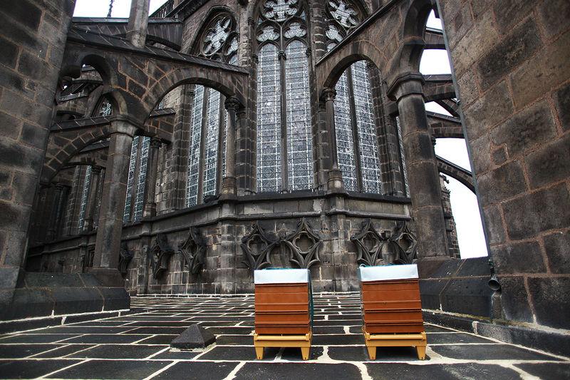 Ruches à la Cathédrale - installation