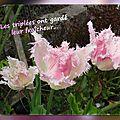 balanicole_2016_05_avril tulipes_37_fraicheur des triplées