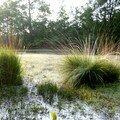 herbes dans la lumière du levant