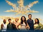 weeds_025698