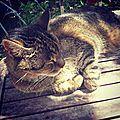 Au revoir mon copain chat :-(