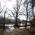 même le talus plonge... la lumière elle, baigne toute la forêt