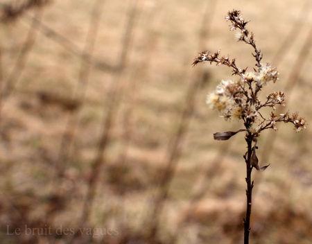 AnnePoncet_Le_bruit_des_vagues_Photo2011_010_Fleur_s_che