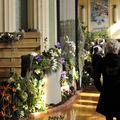 orchidees la ville de dk