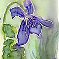 083_violette