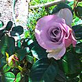 fleuris_18