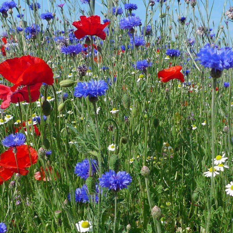 9 juin 2011 tous les messages el 39 lef bien for Livraison fleurs avec message