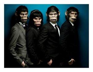 Monkey Crashers Lutetia Lutetiablog Blog