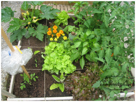 potager_1_juin_2009JPG