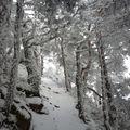 2009 12 18 Sur le chemin en direction du Pic du Lizieux