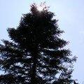 2008 04 14 Le soleil a la cime d'un arbre