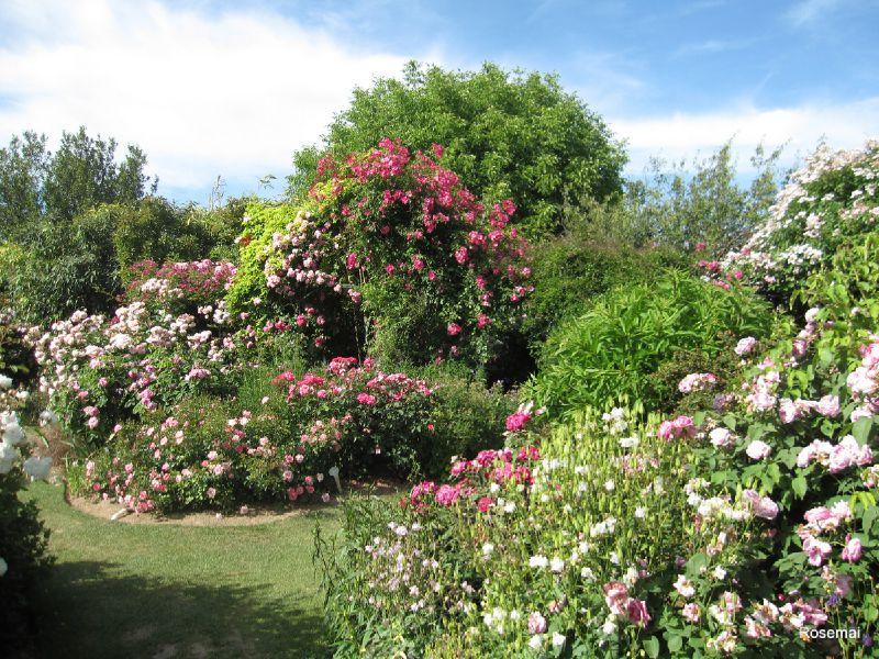 Jardin de Morailles (5)