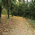 IMG_8963 - t