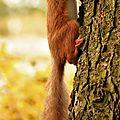 Un écureuil de feuilles avec danièle f, 4e inscrite
