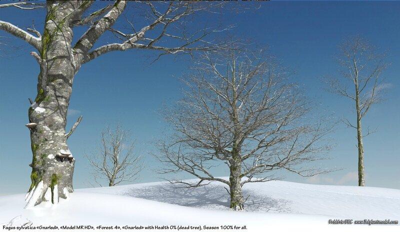 04 Fagus sylvatica beech tree 3d plant model factory 3ds cad max fbx obj winter