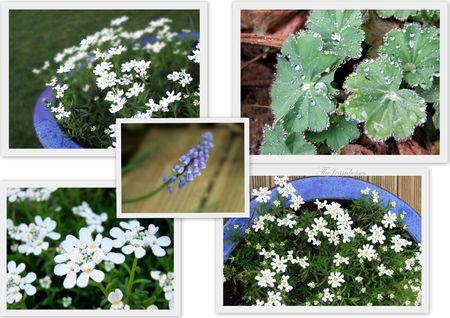 Plantes_fleurs