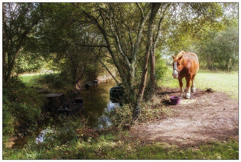 cheval_web