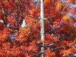 10_couleur_d_automne_30_75_