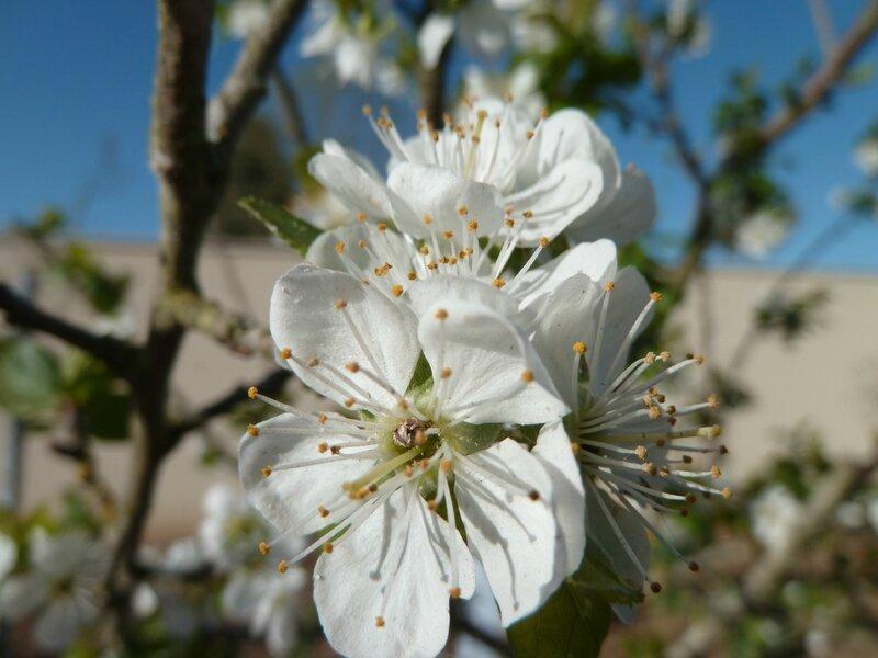 potager début avril (8)
