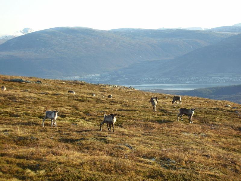 17-10-08 Sortie Montagne et rennes (035)