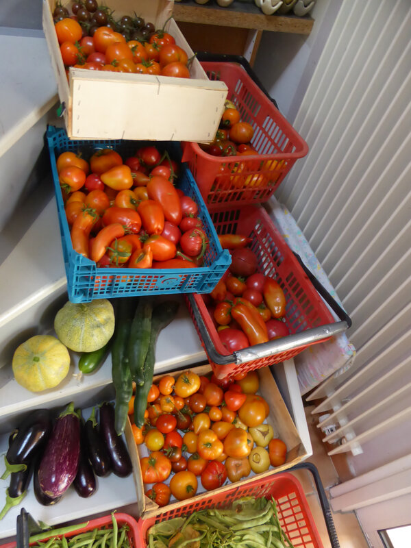 28-haricots, aubergines, tomates, concombres, melons (1)