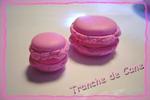 tranche_de_cane1