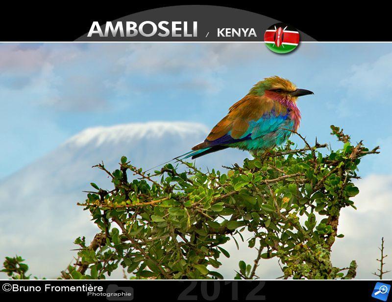 Birdie near Kili