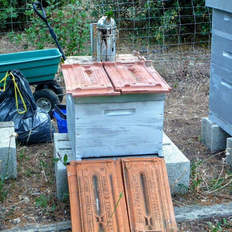 3- le matériel est prêt pour prendre les hausses pleines de miel