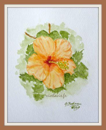 53 - Hibiscus_Octobre 2009