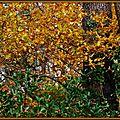 Pins et feuillages colorés 5
