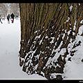 lh sous la neige 1