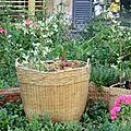petit jardin de rue1