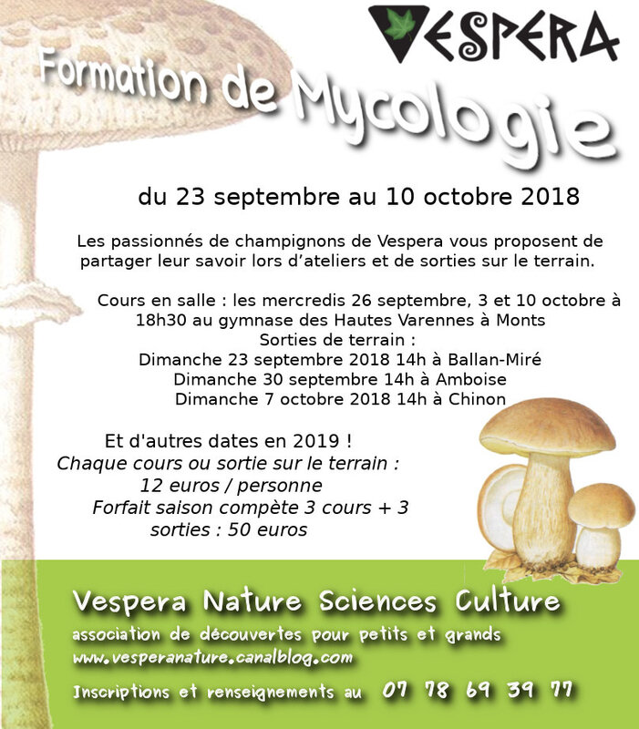 affiche formations champignons