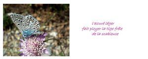 Rose_azur__de_la_Ste_Baume