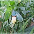 Fleur clochette