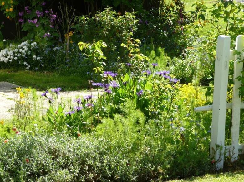 jardin de campagne 1