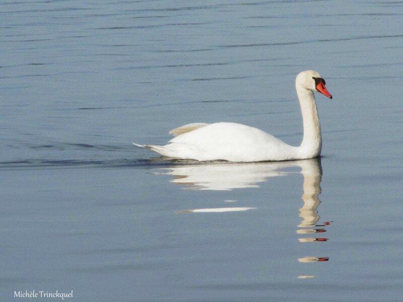 Balade au Lac 191116