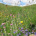 Montagnes de fleurs