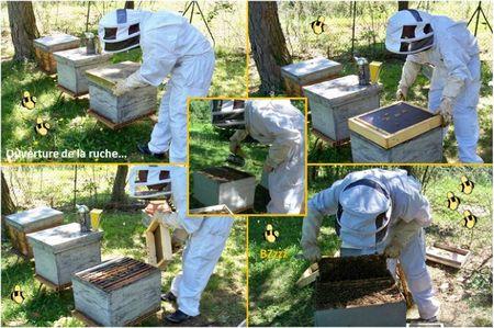 Blog apiculture division d'une ruche abeilles (5)