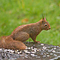 Aujourd'hui, le plaisir de voir les 2 écureuils en même temps !
