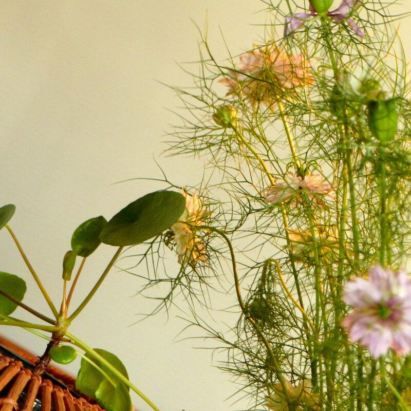 fleurs viviane2