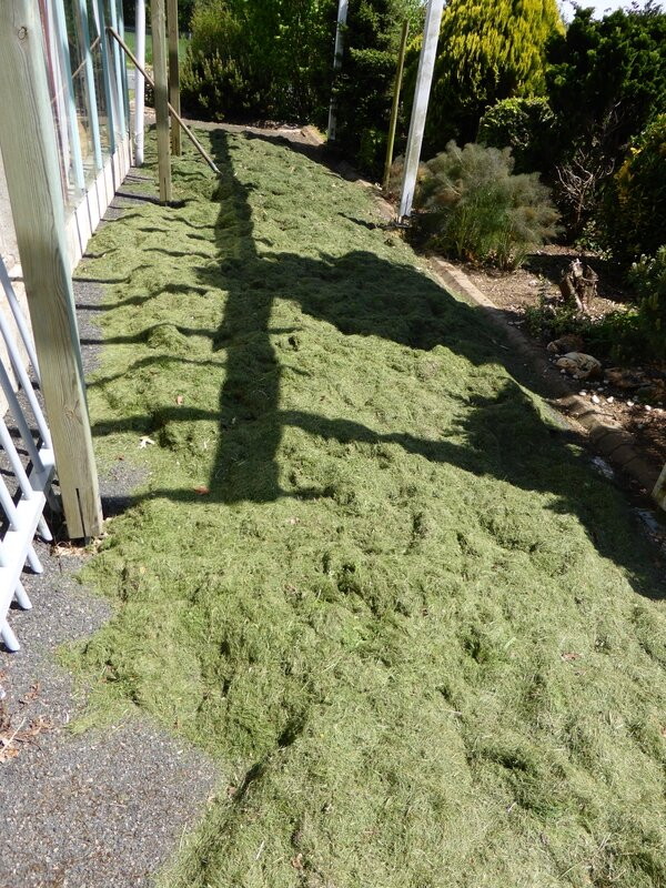 6-herbe à sécher (3)